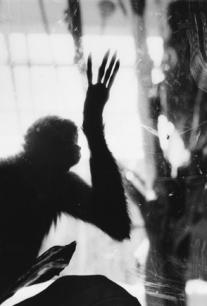 Ombre simiesque